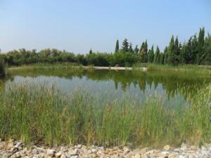 Laguna. Un oasis para la fauna… Escuela Internacional de la Rosacruz Áurea – Lectorium Rosicrucianum