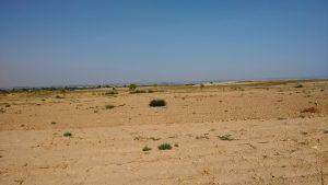 Campos de cultivo en Los Monegros (2)